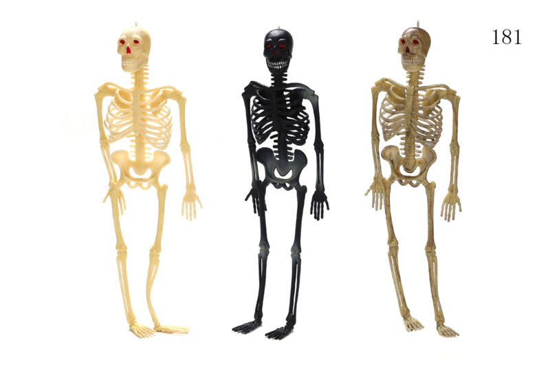 "12"" Human Skeleton 1 Style 3 Assorted Colors"